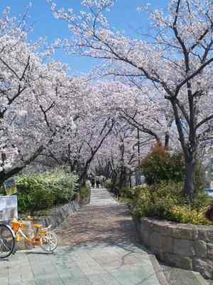 Sakurakouenn